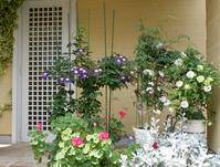 春から初夏へと花も変わっていく - 大屋地爵士のJAZZYな生活