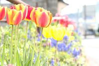 春になったんだね☆彡 - DAIGOの記憶