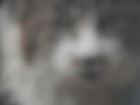 ぽっちんの疑惑 - 愛犬家の猫日記
