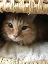 ちゃくとにこ - ご機嫌元氣 猫の森公式ブログ
