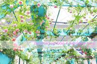 【追記あり】国際バラとガーデニングショウ2017〜バラのトンネルをぬけて〜 - a piece of dream* 植物とDIYと。