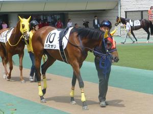 明暗 - ワドサド Waddle in the Saddle