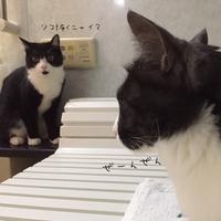猫達のGW - 亜麻仁