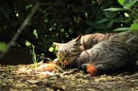 ネコも微睡む - ある日の足跡