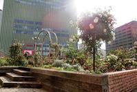 藤田八束の花の街神戸@JR三ノ宮駅の2階に美しいバラ園あり、今最高に綺麗 - 藤田八束の日記