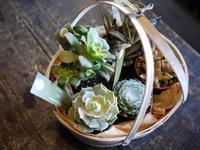 母の日に。多肉植物の寄せ鉢。東苗穂12条にお届け。2017/05/13。 - 札幌 花屋 meLL flowers