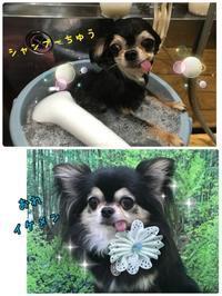店長の日記〜寒暖差〜 - トリミングサロンオリーブスタッフ日記