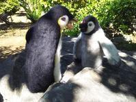 熱血指導ペンギン - うららフェルトライフ