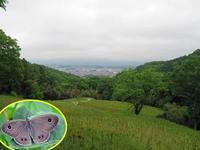 ヒメウラナミジャノメの初見 - 秩父の蝶