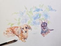 いちにち遅れ。 - 犬の絵、描きます       < Eyes of a Dog >