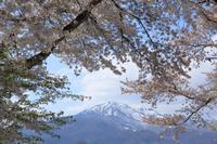名残りの桜  - 風の彩り-2
