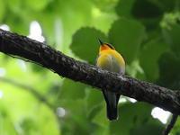 小雨ぱらぱら薄暗い里山 - TACOSの野鳥日記