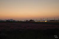 橿原市 残光 - ぶらり記録(写真) 奈良・大阪・・・