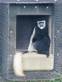 5月15日(月) 糸口 - ほのぼの動物写真日記
