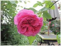 View of my small garden - Garden Diary