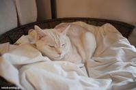 風薫る5月の街にも癒されず - 賃貸ネコ暮らし|賃貸住宅でネコを室内飼いする工夫