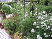 薔薇の庭にはまだ程遠く - 花の自由旋律