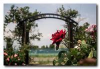 薔薇園。 - 気まぐれフォト