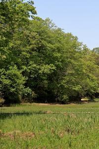 5月の森~その3 - miyabine's フォト日記2~身の周りのきれい・可愛い・面白い~