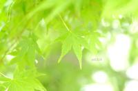 緑がきれい。 - Yuruyuru Photograph