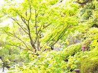 うっとりする新緑美・・・・・・! - 一場の写真 / 足立区リフォーム館・頑張る会社ブログ