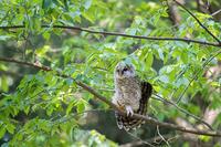 チビちゃん - 趣味の野鳥撮影