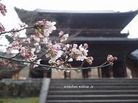 南禅寺の早朝散歩の桜~♡ - アリスのトリップ