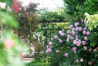 母の日の庭 - Reon&Roses+Lara