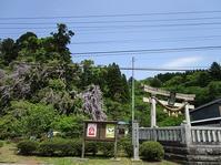 礒部神社(いそべじんじゃ)の藤の花 - ごまめのつぶやき