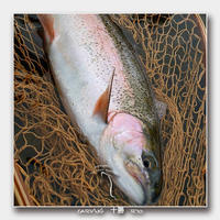 昨日の !! - 十勝 Trout Carving Gallery II
