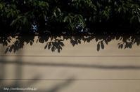 光と影 - Noriko's Photo  -light & shadow-