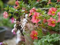 庭の花達 - おいしいもの大好き♪