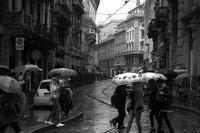hard rain - S w a m p y D o g - my laidback life