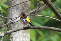 シジュウカラが巣立ったようです - 野鳥写真日記 自分用アーカイブズ