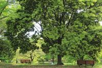 緑の中で。。。#3 - Bamboobooのひとりごと