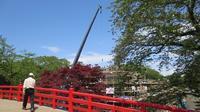 弘前城石垣解体工事作業再開と弘前公園の様子 - 弘前感交劇場