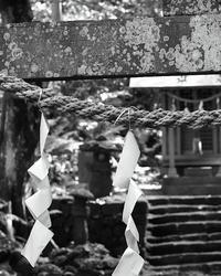青葉月 寫誌 ⑰ 注連縄(SONY NEX6+Ai Nikkor 50mm/F1.4Sを試してみる…その四) - le fotografie di digit@l