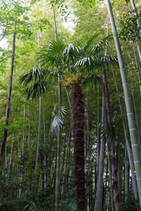 竹林巡り - 彩りの軌跡