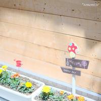 プランターのお花達 - *PHOTOMOMIN*