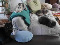 早朝会談 - 『ココんちの(3+1)+1+1猫と一犬のたわごと』 (2+1)+1+1 Pitchouns et 2 Pitchounettes