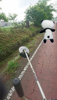 朝から草刈 - 西村電気商会|東近江市|元気に電気!
