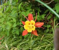 5月15日 この花の名前わかる方いらっしゃいましたら教えて下さい 9.30km - ちんたかたった~♪   feat.じゅっ