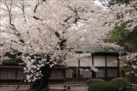 弘前城の桜 - * 写ing!Ⅱ *