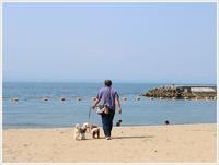 日曜日のお散歩は近場の海のはしごで その1 田ノ浦ビーチ - さくらおばちゃんの趣味悠遊