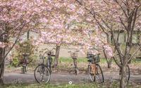 桜色のcampus - ユルリ ユルリト。