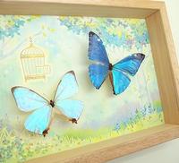 蝶の標本とイラストのコラボ商品の販売開始 - ** アトリエ Chica **