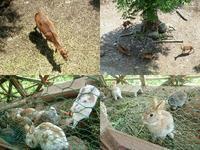 鹿と兎 - NATURALLY