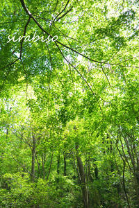 緑のシャワー - 小さな森の写真館 (a small forest story)