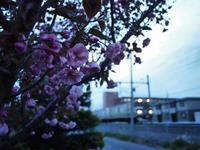 5月15日 今日の写真 - ainosatoブログ02
