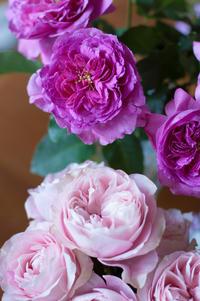 母の日フラワーギフト 花材紹介 - le jardinet